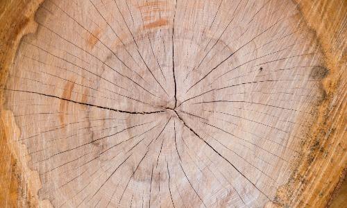 Talking Tree Stumps